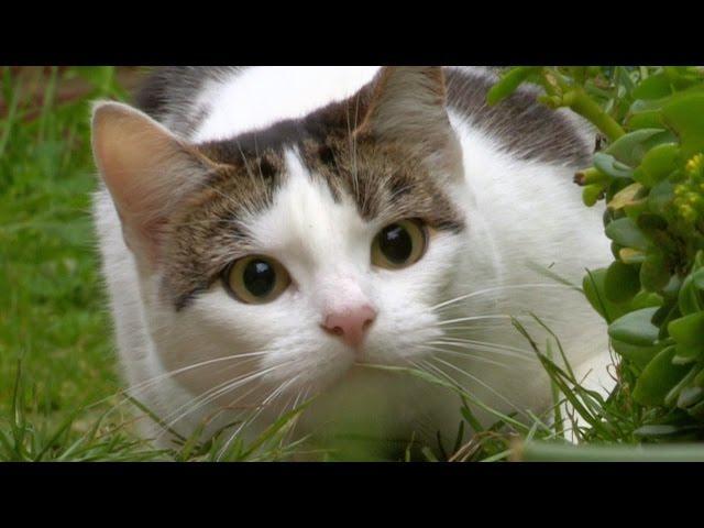 sarah ellis cat training classes