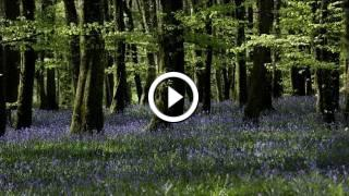 Relaxing Nature Sounds- Instrumental Cello Music- Tranquil Forest