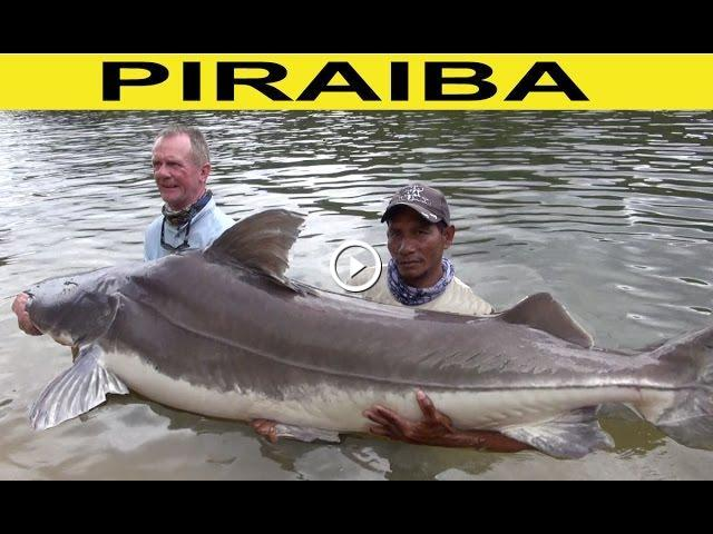 Man Battles Monster Amazon Catfish